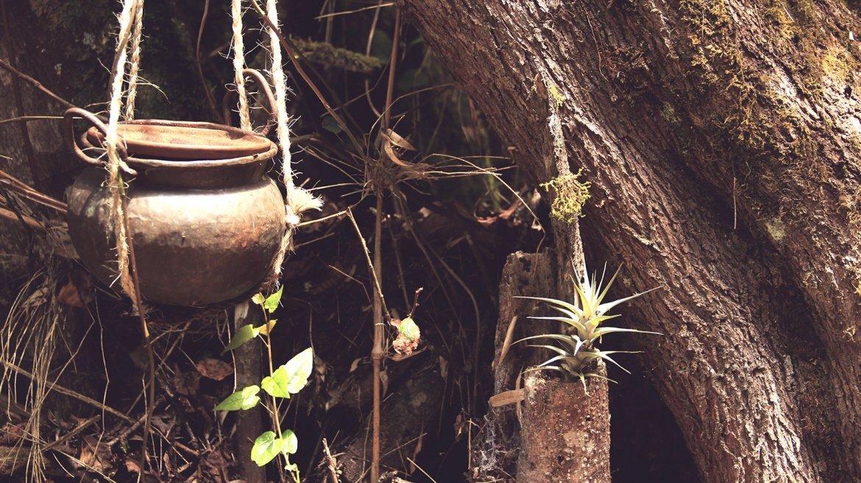 El bosque mágico de Intihuatana